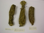 Alaska State Museum II-A-4422 to 4224 Iñupiaq bladder pouches from King Island